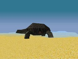 Nw-normal-tortise