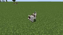 White brown goat