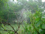 Arachne's Temple-Gardens