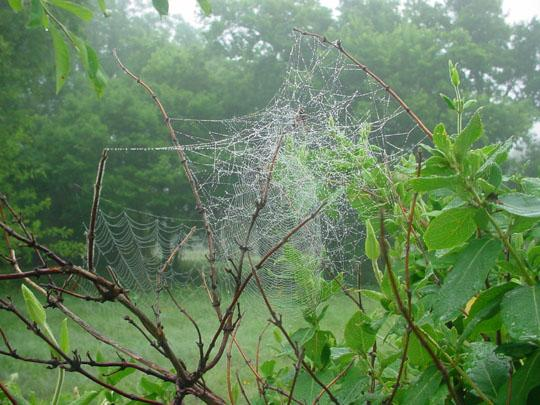 File:Arachne's Temple-Gardens.JPG