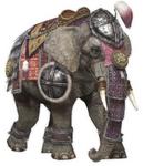 DW7 Elephant
