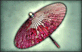 File:1-Star Weapon - Spring Parasol.png