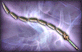 File:3-Star Weapon - Dragon Chain.png