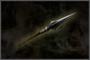 Iron Spear (DW4)