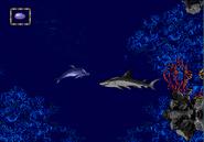 Reef shark turtle islands kitnee