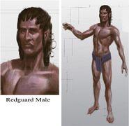 Redguard Male