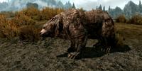 Cave Bear (Skyrim)