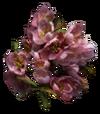 Timsa-Come-By Flowers Tribunal Ingredient