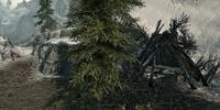 Forsworn Ambush Camp