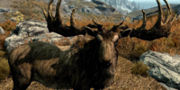Elk (Skyrim)
