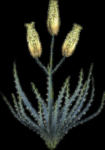 File:Aloe Vera Plant.png