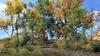 Trees of Tamriel Garden Pack