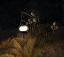 Jode's Light