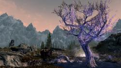 TESV The Sleeping Tree