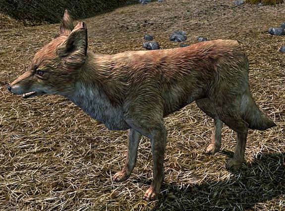 File:Fox Skyrim.png