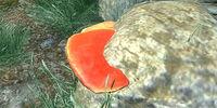 Cinnabar Polypore Red Cap