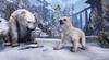 Snow Bear Cub