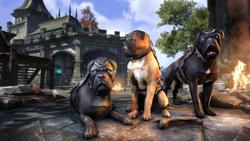 Alliance War Dog