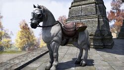 Imperial White Horse