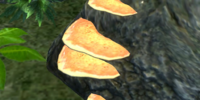 Cinnabar Polypore Yellow Cap