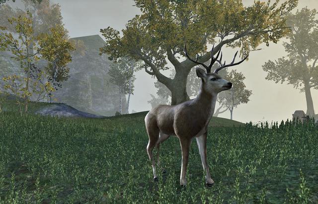 File:Deer Adult(Online).png