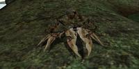 Mudcrab (Morrowind)