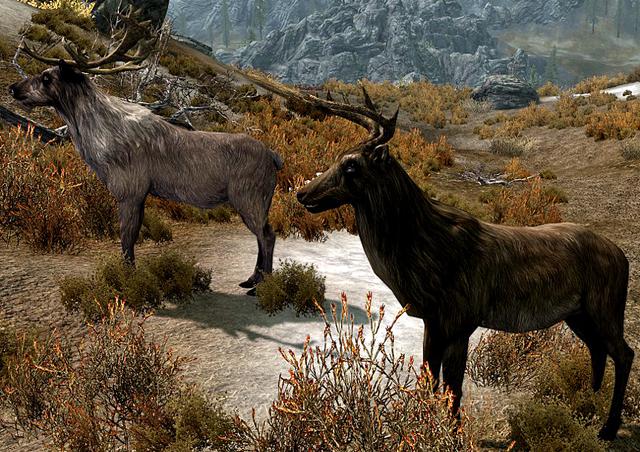 File:Deer Skyrim 1.png