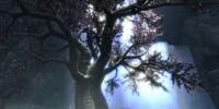 Eldergleam Tree