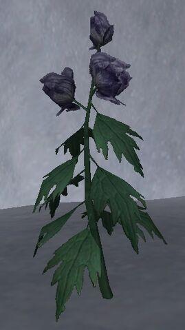 File:Wolfsbane Petals.jpg