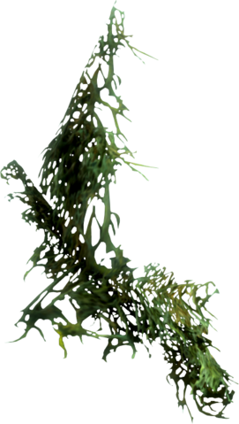 File:Hanging moss.png