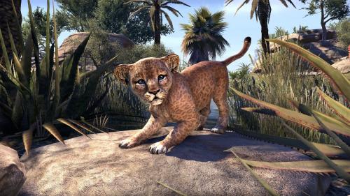 File:Senche-Lion Cub.png