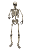 Skeleton MW