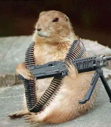 File:Groundhog.jpg