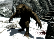 Werebear at Snowclad Ruins