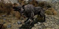 Pit Wolf