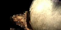 Baccello fungale di palude