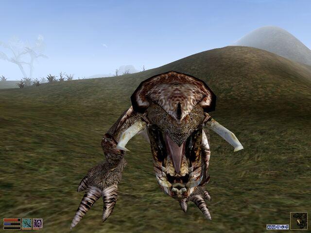 File:Kagouti attacking.jpg
