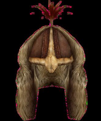 File:Fur Helmet (Oblivion).png