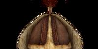 Helmet of the Owl