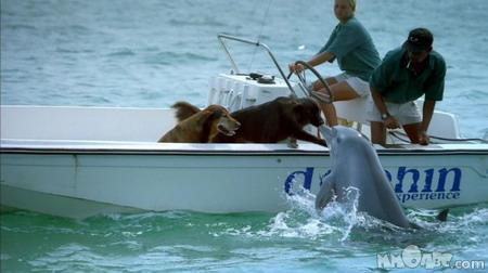 File:Animal understandng.jpg
