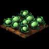Crop Cabbage Grown SW Icon