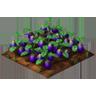 Crop Eggplant Grown SW Icon