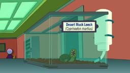 Desert Muck Leech