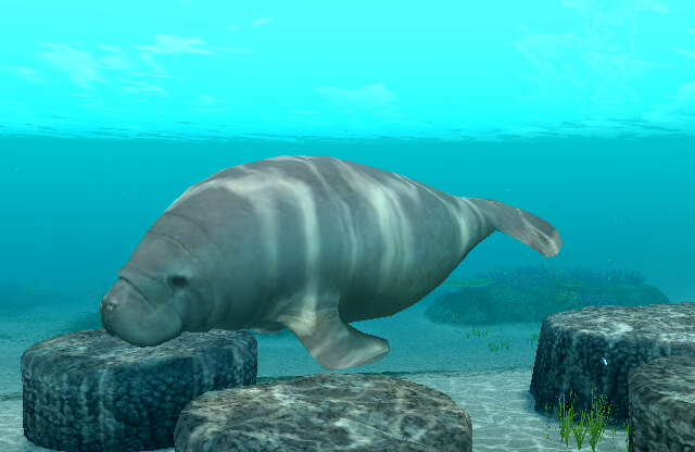 save the west indian manatee Manatee conservation there are three species of manatee and all are either threatened or endangered the west indian and amazonian manatees are both endangered, and.