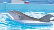 Dolphin Tale 3