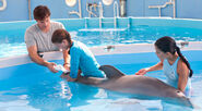 Dolphin Tale 6