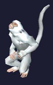 Race monkey