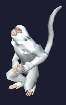 File:Race monkey.jpg