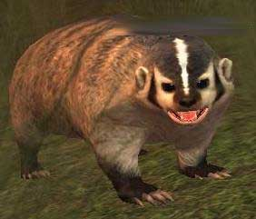 File:Race badger.jpg