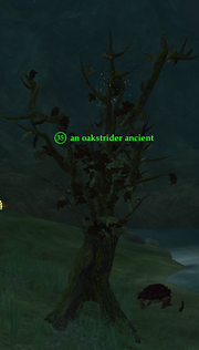 An oakstrider ancient